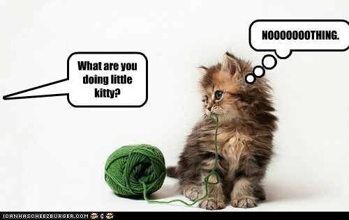 What are you doing little kitty? NOOOOOOOTHING.