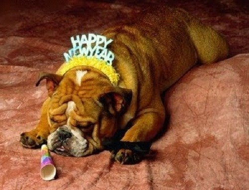 dogs drunk bulldog new years eve happy new year hat - 6926337024