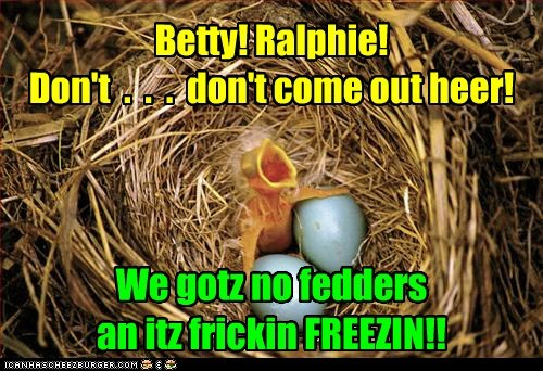 warning,freezing,birds,baby birds,feathers,hatched,dont
