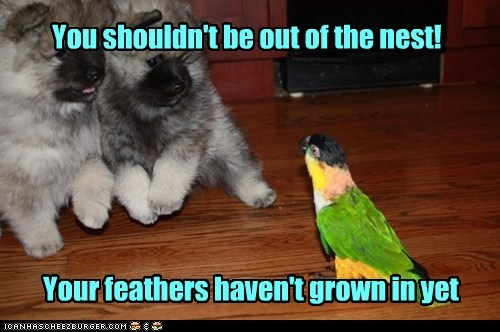 You shouldn't be out of the nest! Your feathers haven't grown in yet