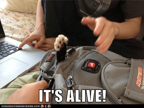 paw backback captions alive Cats - 6926570496