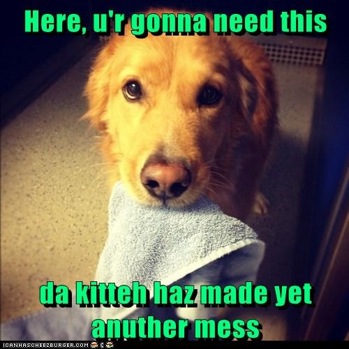 dogs,towel,blame the cat,golden retriever,mess