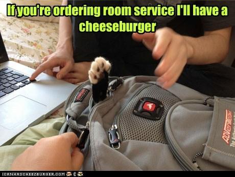 Cheezburger Image 6926688256