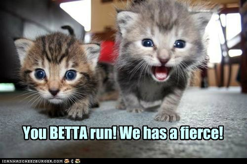 You BETTA run! We has a fierce!