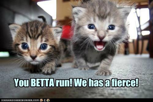 cat fierce cyoot kitty funny animals - 6926699776