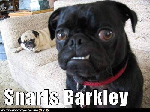 Snarls Barkley