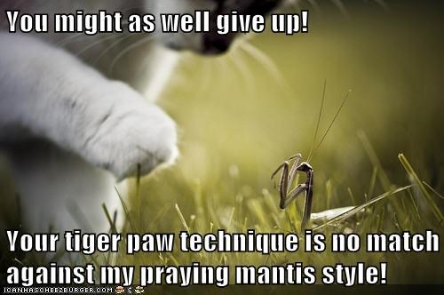no match styles give up kung fu praying mantis fighting Cats