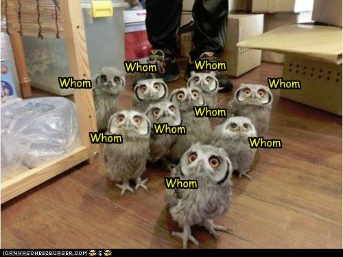 grammar,SAT,owls,perfect,test,who,whom
