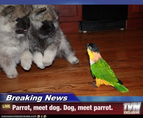 Breaking News - Parrot, meet dog. Dog, meet parrot.