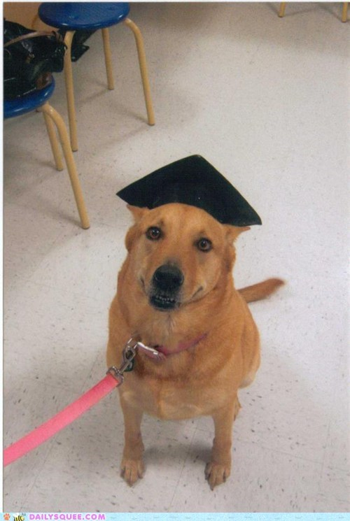 dogs graduation reader squee pets squee - 6928041984