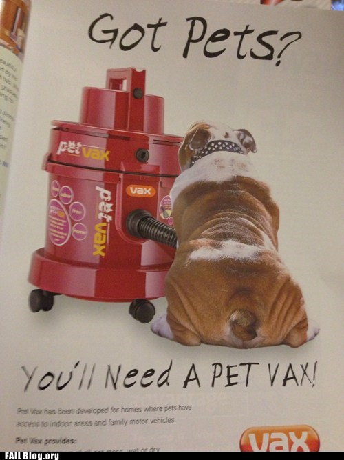 advertisement pets accidental sexy not what it looks like vacuum
