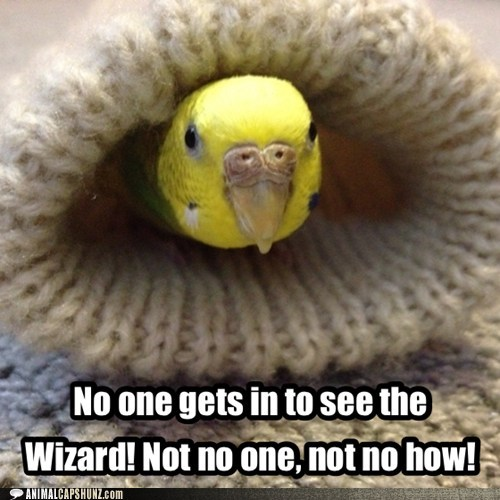 No one gets in to see the Wizard! Not no one, not no how!