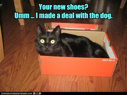 Your new shoes? Umm ... I made a deal with the dog.
