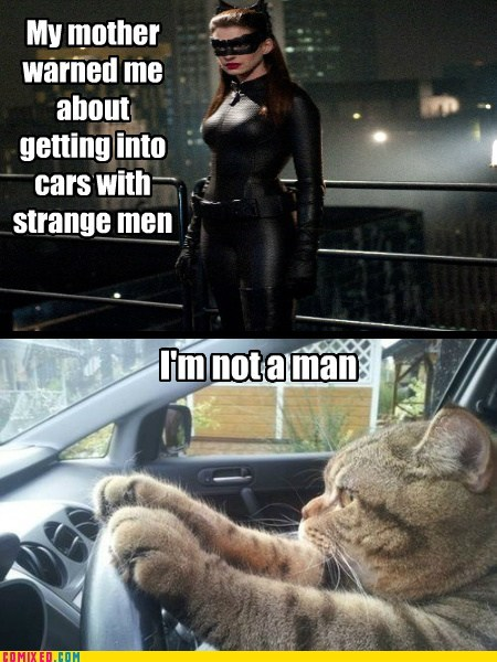 cat Movie Dark Knight Rises catwoman