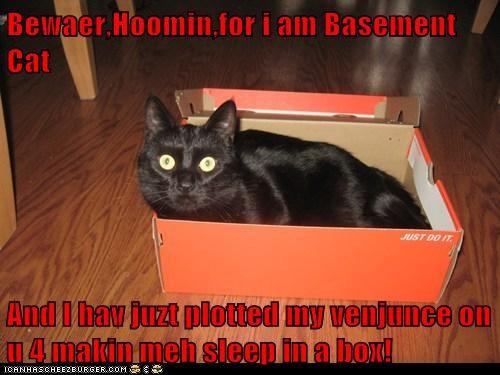 Bewaer,Hoomin,for i am Basement Cat  And I hav juzt plotted my venjunce on u 4 makin meh sleep in a box!