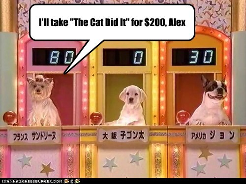 Jeopardy dogs game show french bulldogs the cat did it golden lab yorkshire terrier