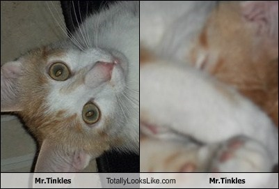 Mr.Tinkles Totally Looks Like Mr.Tinkles