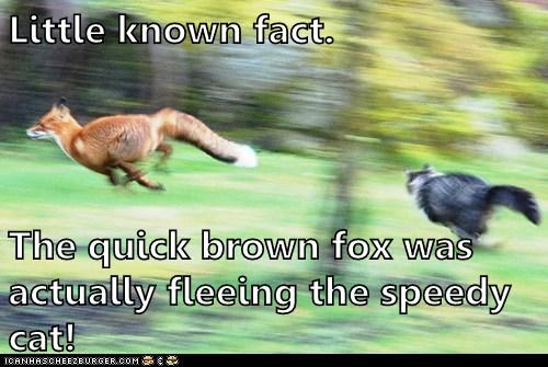 foxes,little known fact,speedy,chasing,Cats,fleeing