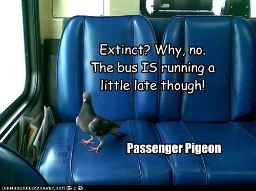 Extinct? Why, no. The bus IS running a little late though! Passenger Pigeon