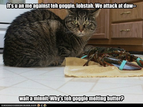 dogs,butter,goggie,attack,lobsters,wait a minute,Cats,team
