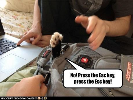 No! Press the Esc key, press the Esc key!