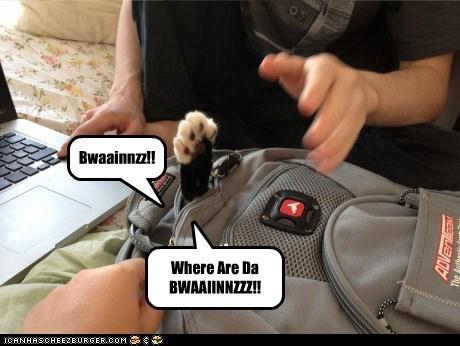 Bwaainnzz!! Where Are Da BWAAIINNZZZ!!