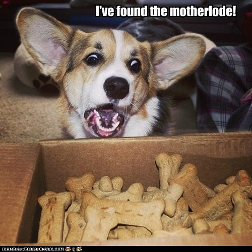 shock,dogs,treats,bones,box,corgi,motherlode,happy