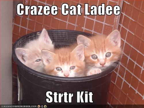 bukkit Cats crazy cat lady kitten lolcats lolkittehs - 692991744