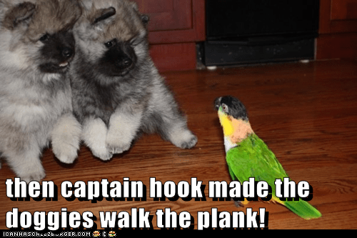 scary stories birds puppies scared pomeranians parrot - 6929920256