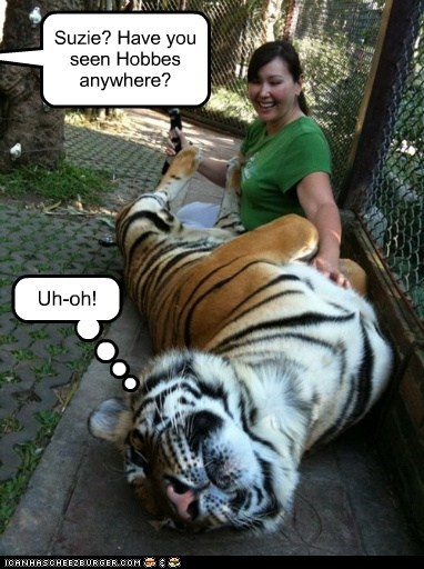 petting calvin and hobbes belly scratch uh oh tiger Cats suzie - 6930186496