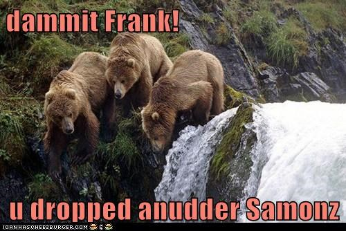dammit,bears,salmon,waterfall,dropped