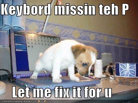 cute jack russel terrier laptop puppy - 693028096