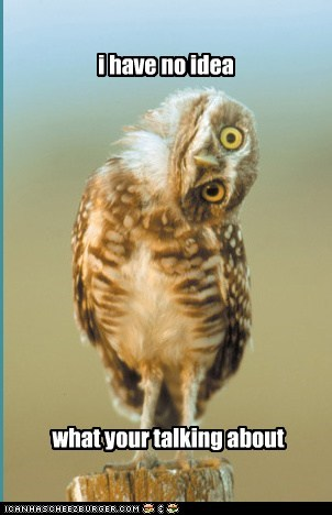 head tilt,no idea,what are you talking about,owls,stupid