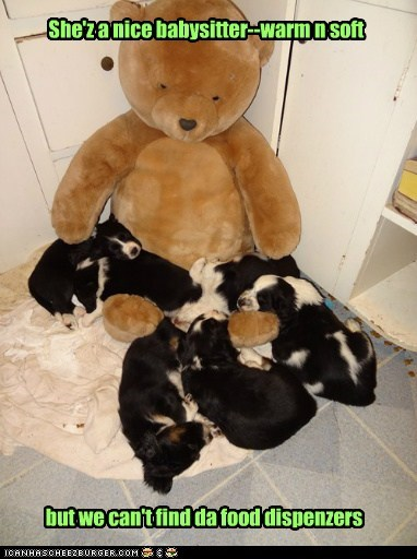 teddy bear dogs puppies cuddles soft what breed warm - 6930690816