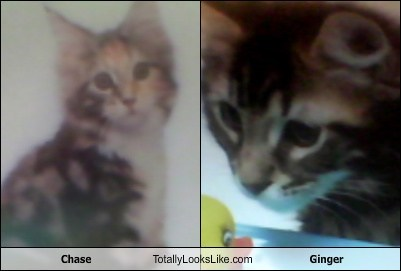 Chase Totally Looks Like Ginger
