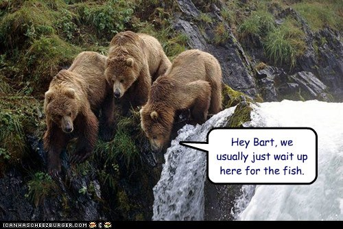 usually bears waiting waterfall mistake fell