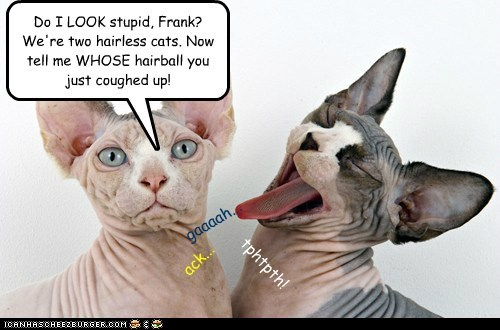 Do I LOOK stupid, Frank? We're two hairless cats. Now tell me WHOSE hairball you just coughed up! gaaaah... ack... tphtpth!