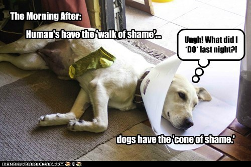 Human's have the 'walk of shame'... dogs have the 'cone of shame.' The Morning After: Ungh! What did I *DO* last night?!