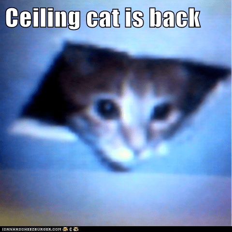 Ceiling cat is back