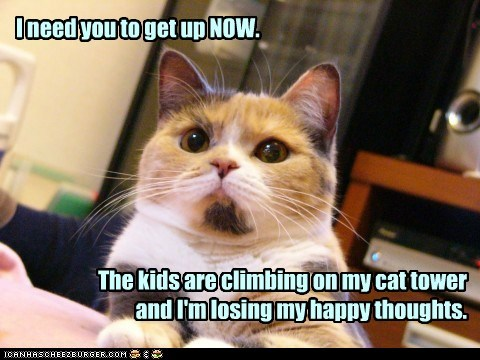 I need you to get up NOW. The kids are climbing on my cat tower and I'm losing my happy thoughts.
