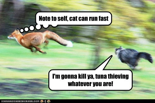 Note to self, cat can run fast