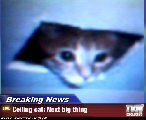 Breaking News - Ceiling cat: Next big thing