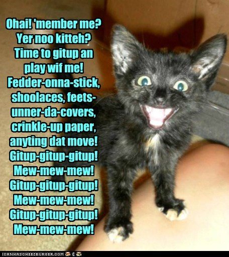 annoying captions kitten morning sleep Cats - 6931853056