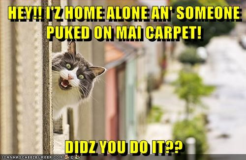 HEY!! I'Z HOME ALONE AN' SOMEONE PUKED ON MAI CARPET! DIDZ YOU DO IT??