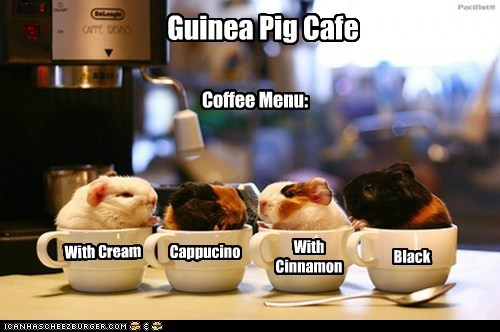 menu cups guinea pigs cappuccino coffee cream cafe black - 6932368128