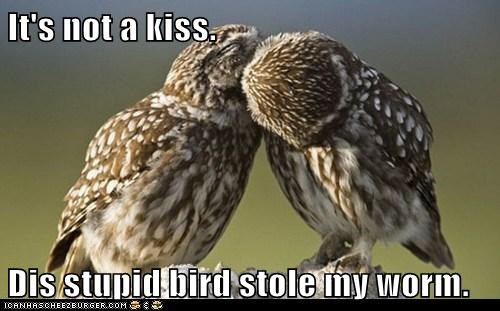 It's not a kiss. Dis stupid bird stole my worm.