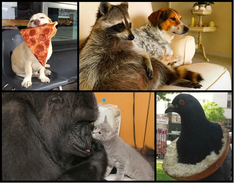 best animals 2015