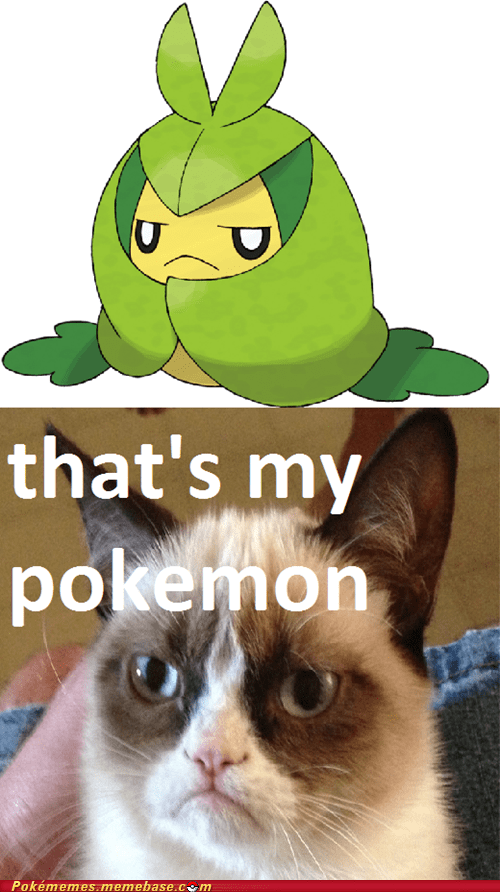 that's my pokémon,Grumpy Cat,tard,my bad bro,swadloon