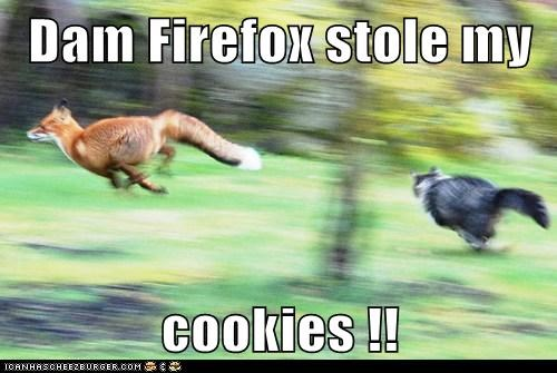 foxes chasing firefox stole cookies angry Cats - 6932891392