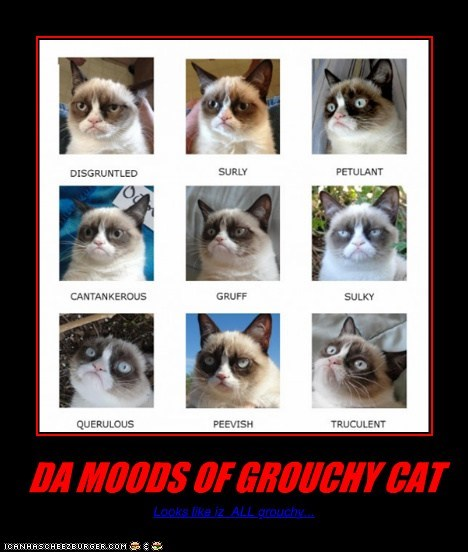 DA MOODS OF GROUCHY CAT